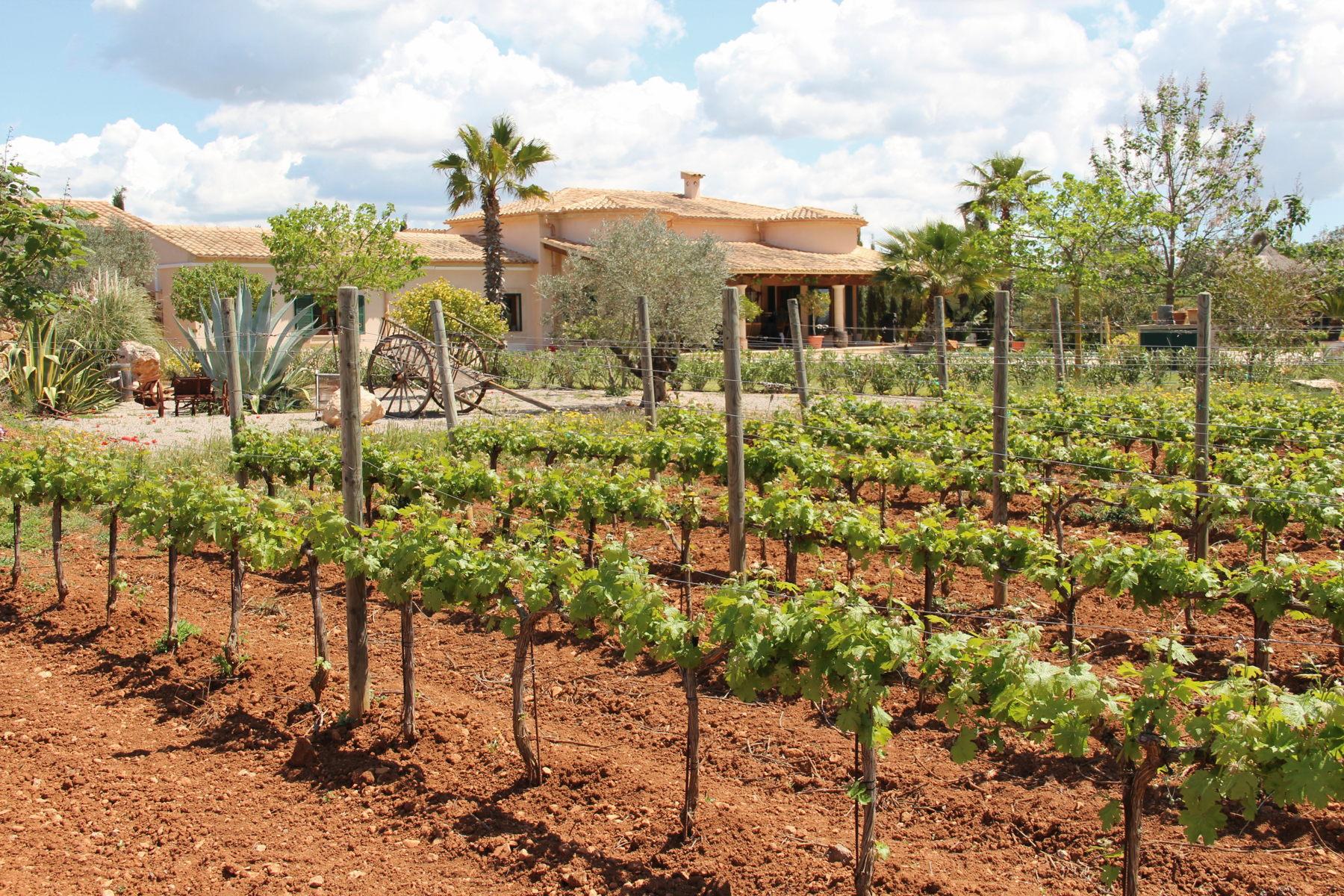 Weingut in Llucmajor © MARUCCIA